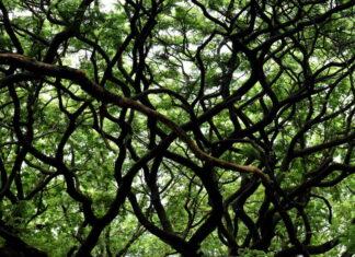 Rozdrabniacz gałęzi do ogrodu
