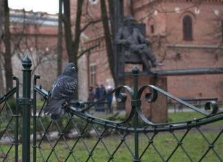 wydarzenia w krakowie